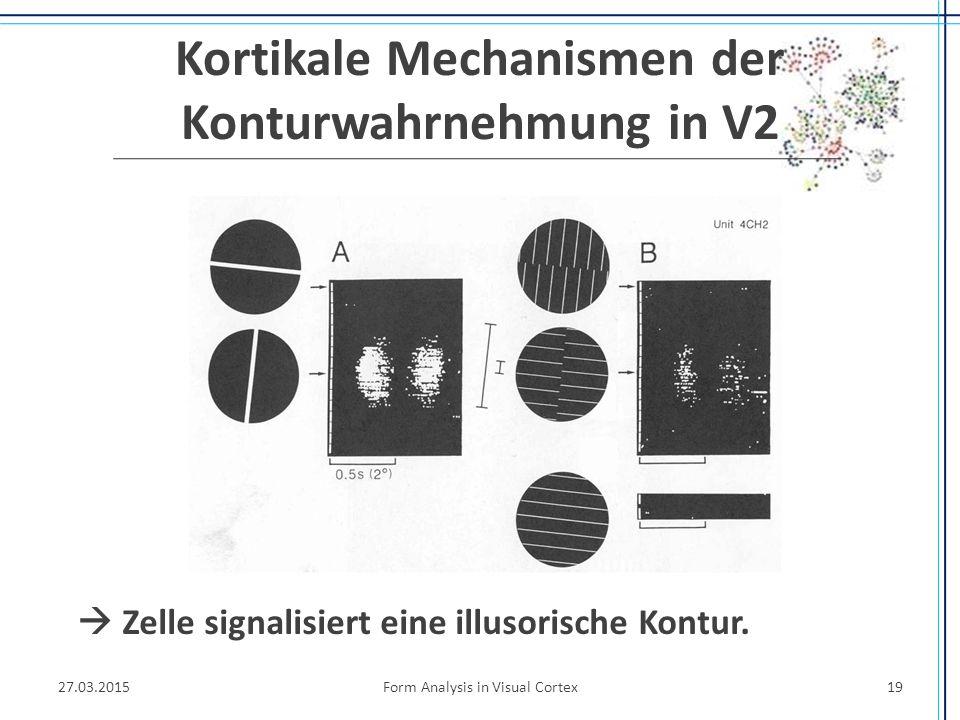 Kortikale Mechanismen der Konturwahrnehmung in V2  Zelle signalisiert eine illusorische Kontur. 27.03.2015Form Analysis in Visual Cortex19