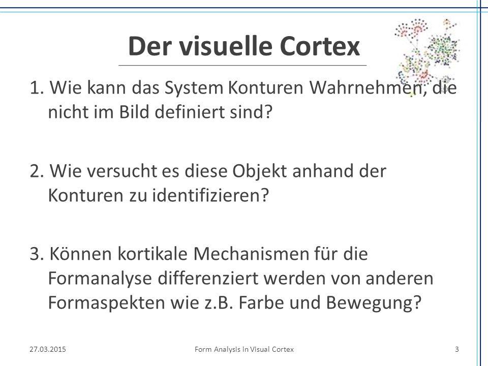 Der visuelle Cortex Teil der Großhirnrinde, ermöglicht visuelle Wahrnehmung Ihm entsprechen die Areale 17, 18, 19 unterteilt in -Primäre Sehrinde (V1) -Sekundäre Sehrinde (V2-V5)  Rüdiger von der Heydt: Konzentration auf V1 und V2.