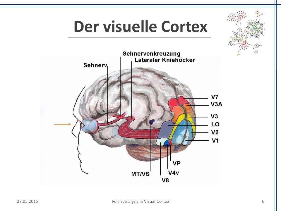 Der primäre visuelle Cortex (Areal 17, V1) Input der Augen weitergeleitet über afferente Fasern der Neurone des Corpus geniculatum laterale zu V1 David Hubel und Torsten Wiesel, 1959  Antwortverhalten von Neuronen in V1 auf visuelle Reize.