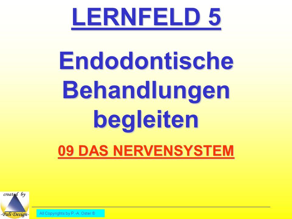 All Copyrights by P.-A. Oster ® LERNFELD 5 Endodontische Behandlungen begleiten 09 DAS NERVENSYSTEM