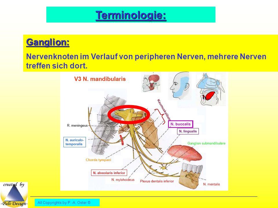 All Copyrights by P.-A. Oster ® Terminologie: Ganglion: Nervenknoten im Verlauf von peripheren Nerven, mehrere Nerven treffen sich dort.