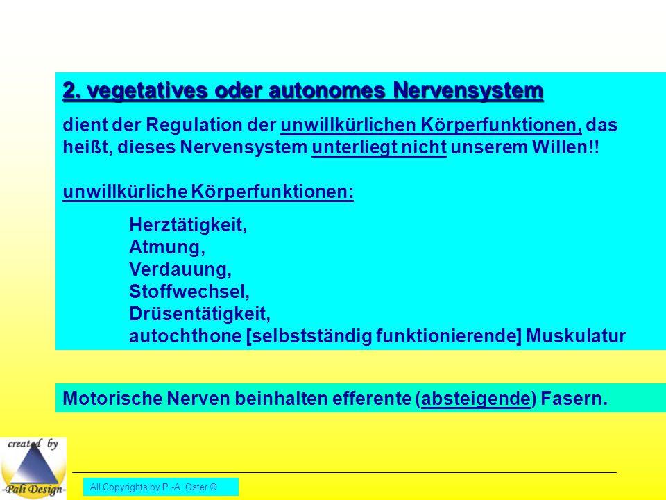 All Copyrights by P.-A. Oster ® 2. vegetatives oder autonomes Nervensystem dient der Regulation der unwillkürlichen Körperfunktionen, das heißt, diese