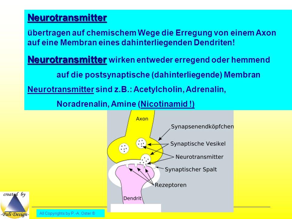 All Copyrights by P.-A. Oster ® Neurotransmitter übertragen auf chemischem Wege die Erregung von einem Axon auf eine Membran eines dahinterliegenden D