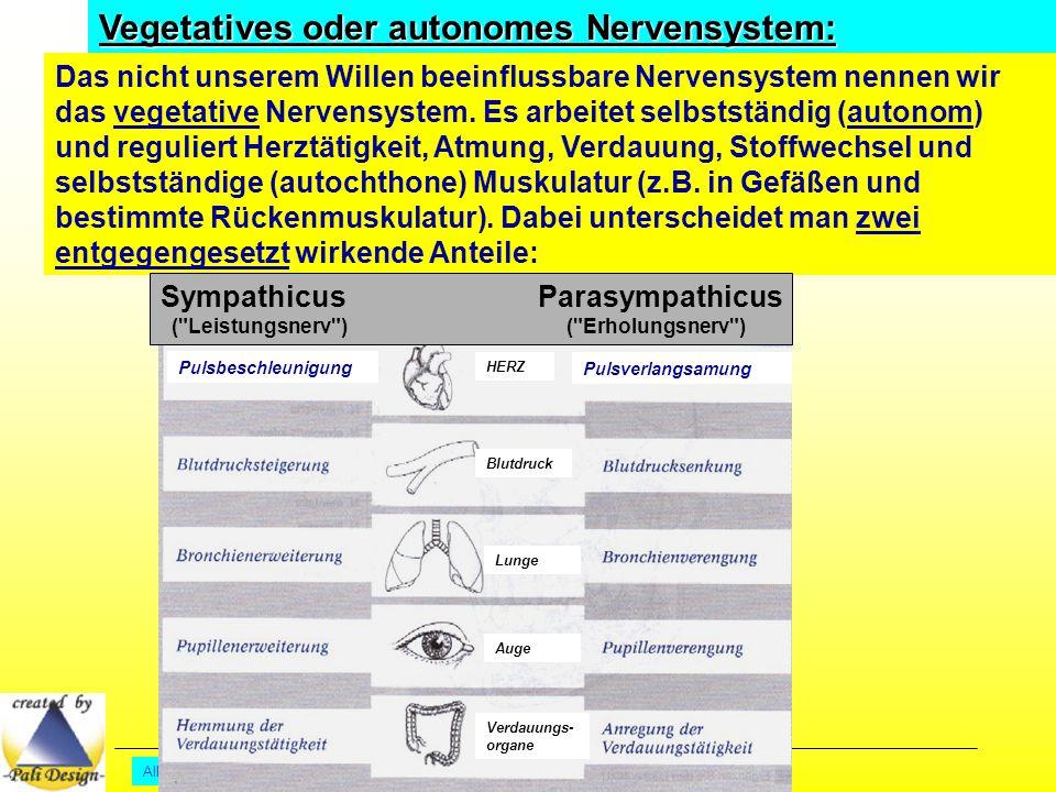 All Copyrights by P.-A. Oster ® Vegetatives oder autonomes Nervensystem: Das nicht unserem Willen beeinflussbare Nervensystem nennen wir das vegetativ