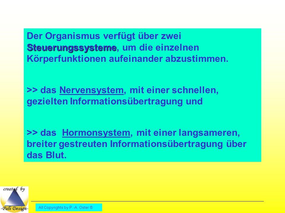 All Copyrights by P.-A. Oster ® Steuerungssysteme Der Organismus verfügt über zwei Steuerungssysteme, um die einzelnen Körperfunktionen aufeinander ab
