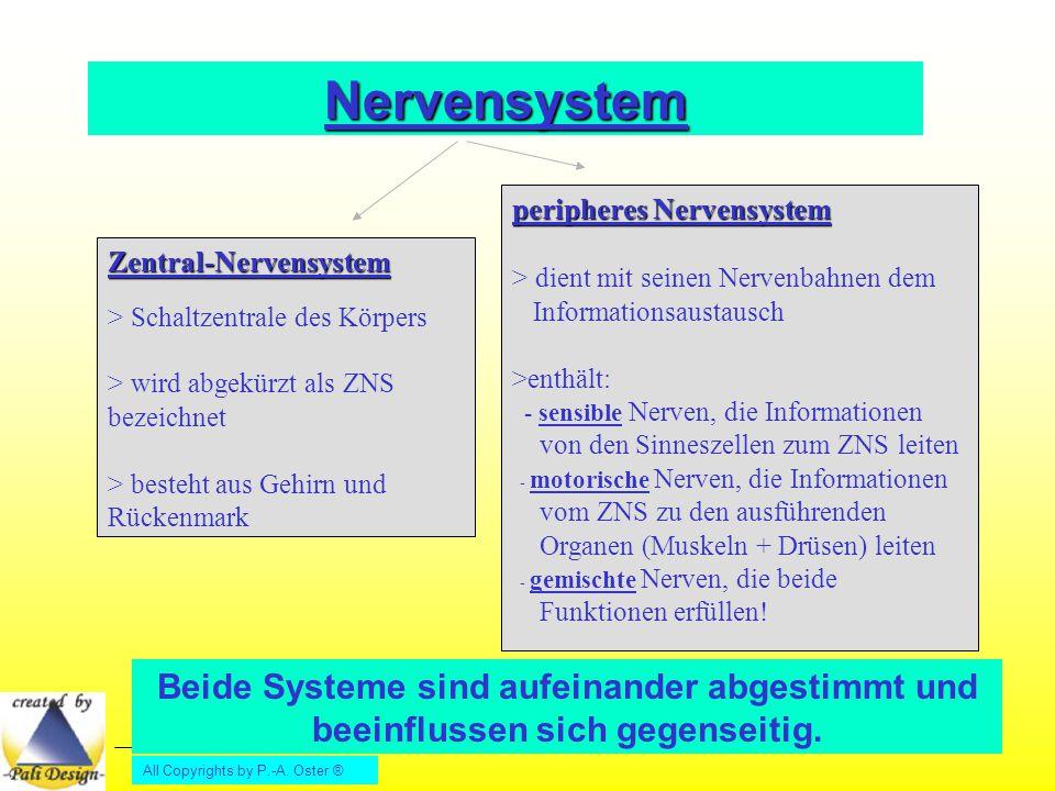 All Copyrights by P.-A. Oster ® Nervensystem Zentral-Nervensystem > Schaltzentrale des Körpers > wird abgekürzt als ZNS bezeichnet > besteht aus Gehir