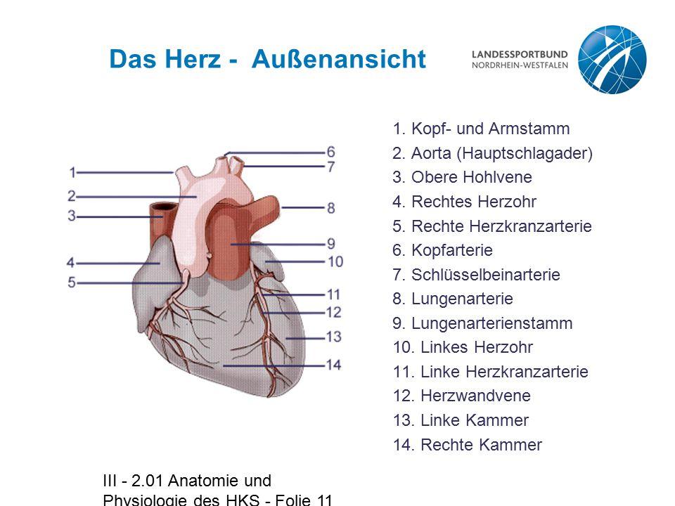 III - 2.01 Anatomie und Physiologie des HKS - Folie 11 Das Herz - Außenansicht 1. Kopf- und Armstamm 2. Aorta (Hauptschlagader) 3. Obere Hohlvene 4. R
