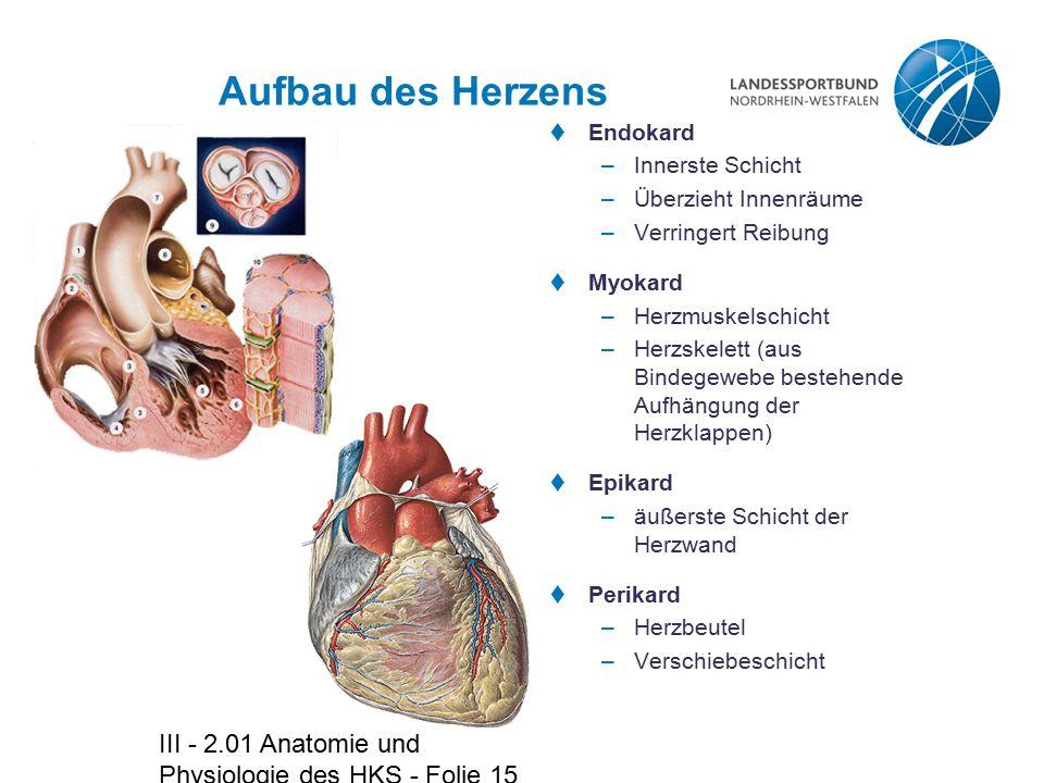 III - 2.01 Anatomie und Physiologie des HKS - Folie 15 Aufbau des Herzens  Endokard –Innerste Schicht –Überzieht Innenräume –Verringert Reibung  Myo