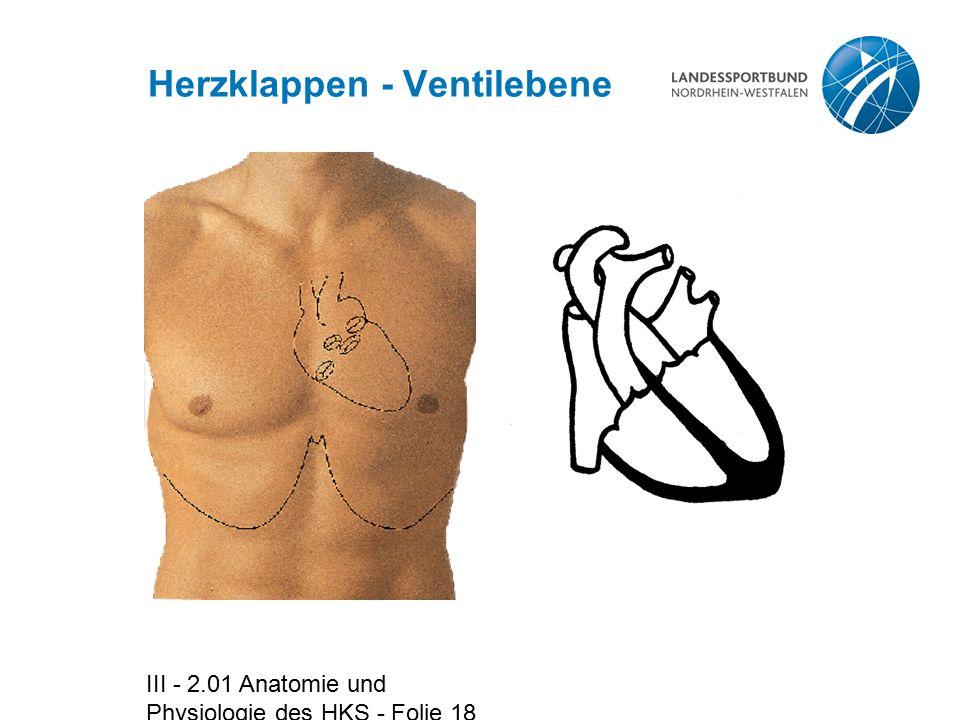 III - 2.01 Anatomie und Physiologie des HKS - Folie 18 Herzklappen - Ventilebene