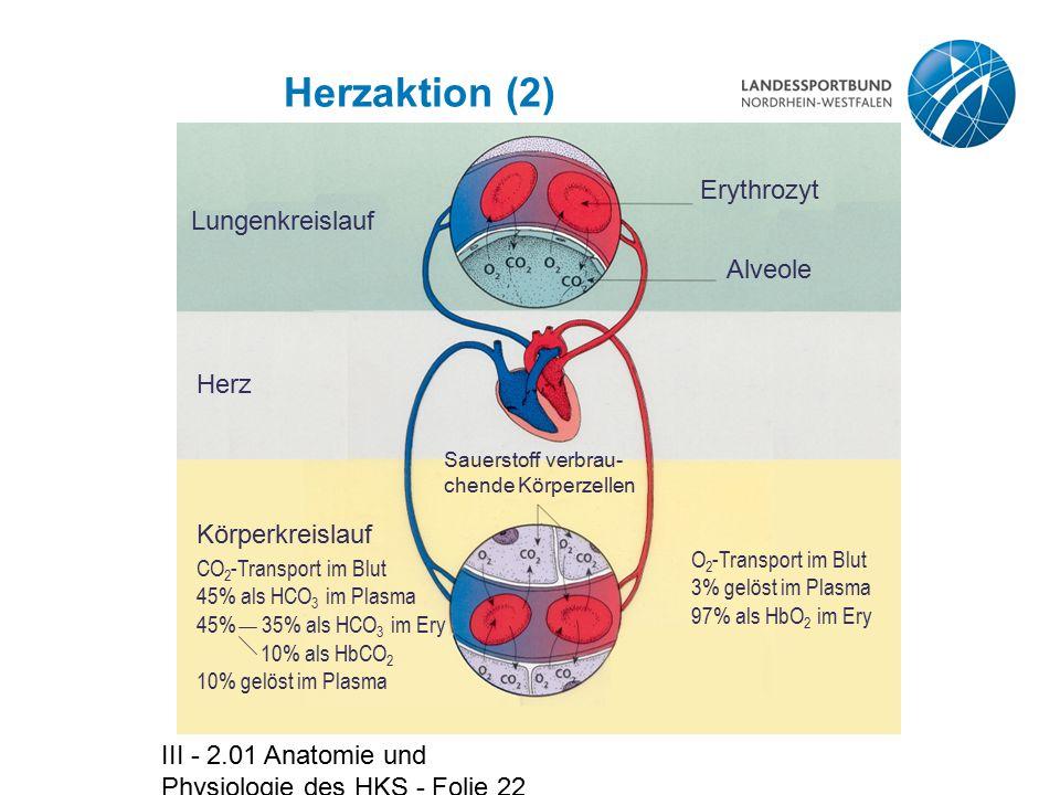 III - 2.01 Anatomie und Physiologie des HKS - Folie 22 Herzaktion (2) Lungenkreislauf Herz Körperkreislauf Alveole Erythrozyt Sauerstoff verbrau- chen