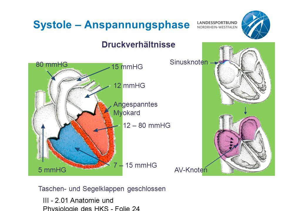 III - 2.01 Anatomie und Physiologie des HKS - Folie 24 Systole – Anspannungsphase Druckverhältnisse 15 mmHG 12 mmHG Angespanntes Myokard 12 – 80 mmHG
