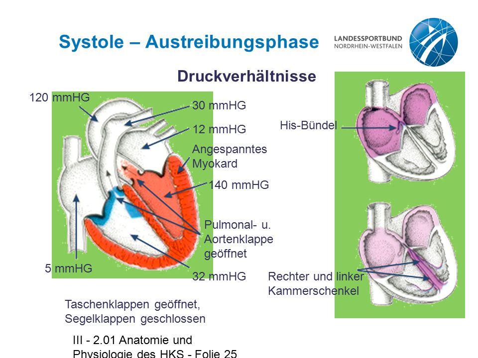 III - 2.01 Anatomie und Physiologie des HKS - Folie 25 Systole – Austreibungsphase Druckverhältnisse 30 mmHG 12 mmHG Angespanntes Myokard 140 mmHG 32