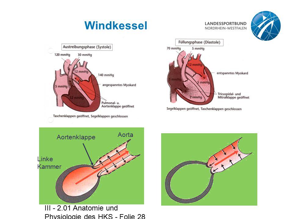 III - 2.01 Anatomie und Physiologie des HKS - Folie 28 Windkessel Linke Kammer Aortenklappe Aorta