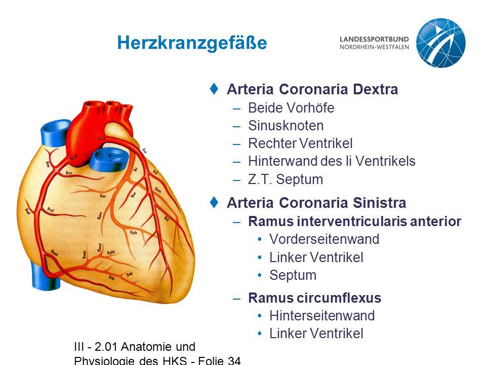 III - 2.01 Anatomie und Physiologie des HKS - Folie 34 Herzkranzgefäße  Arteria Coronaria Dextra –Beide Vorhöfe –Sinusknoten –Rechter Ventrikel –Hint