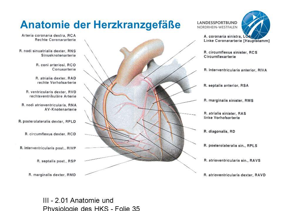 III - 2.01 Anatomie und Physiologie des HKS - Folie 35 Anatomie der Herzkranzgefäße