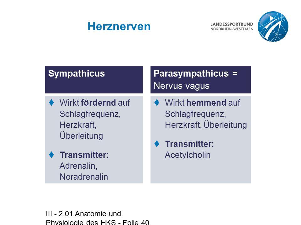 III - 2.01 Anatomie und Physiologie des HKS - Folie 40 Herznerven  Wirkt fördernd auf Schlagfrequenz, Herzkraft, Überleitung  Transmitter: Adrenalin