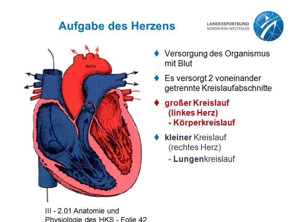 III - 2.01 Anatomie und Physiologie des HKS - Folie 42 Aufgabe des Herzens  Versorgung des Organismus mit Blut  Es versorgt 2 voneinander getrennte