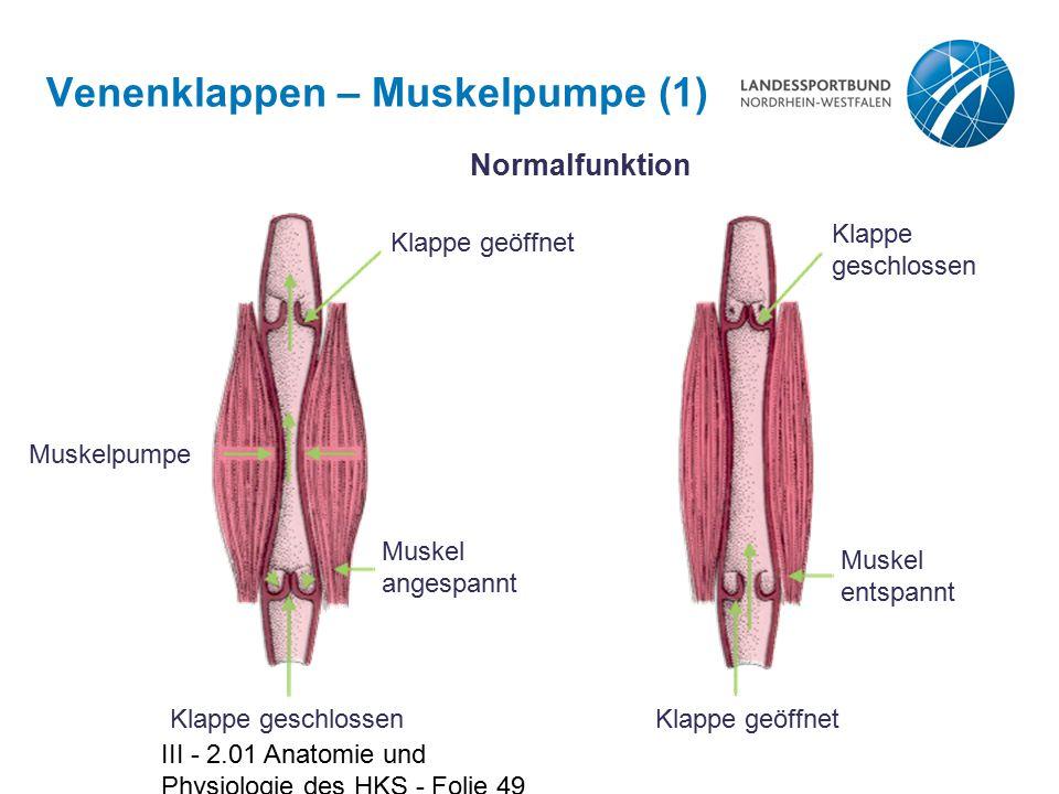 III - 2.01 Anatomie und Physiologie des HKS - Folie 49 Venenklappen – Muskelpumpe (1) Muskelpumpe Klappe geschlossen Muskel angespannt Klappe geöffnet