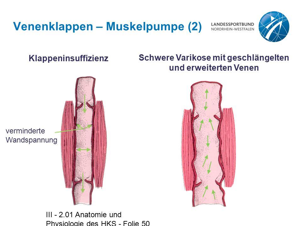 III - 2.01 Anatomie und Physiologie des HKS - Folie 50 Venenklappen – Muskelpumpe (2) Klappeninsuffizienz verminderte Wandspannung Schwere Varikose mi
