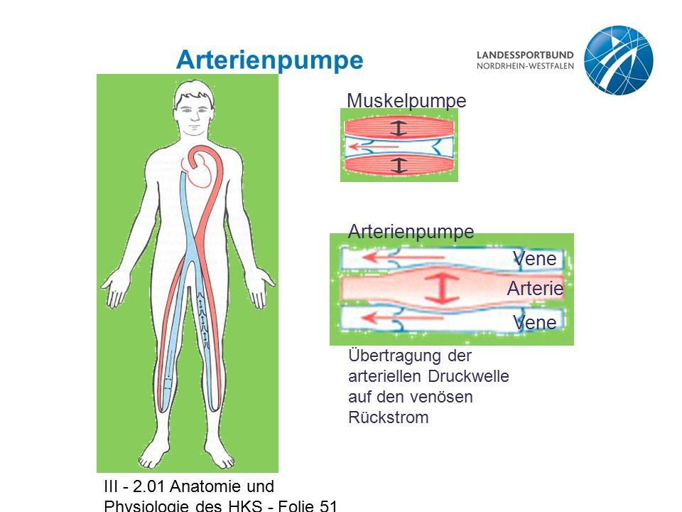 III - 2.01 Anatomie und Physiologie des HKS - Folie 51 Arterienpumpe Muskelpumpe Übertragung der arteriellen Druckwelle auf den venösen Rückstrom Vene