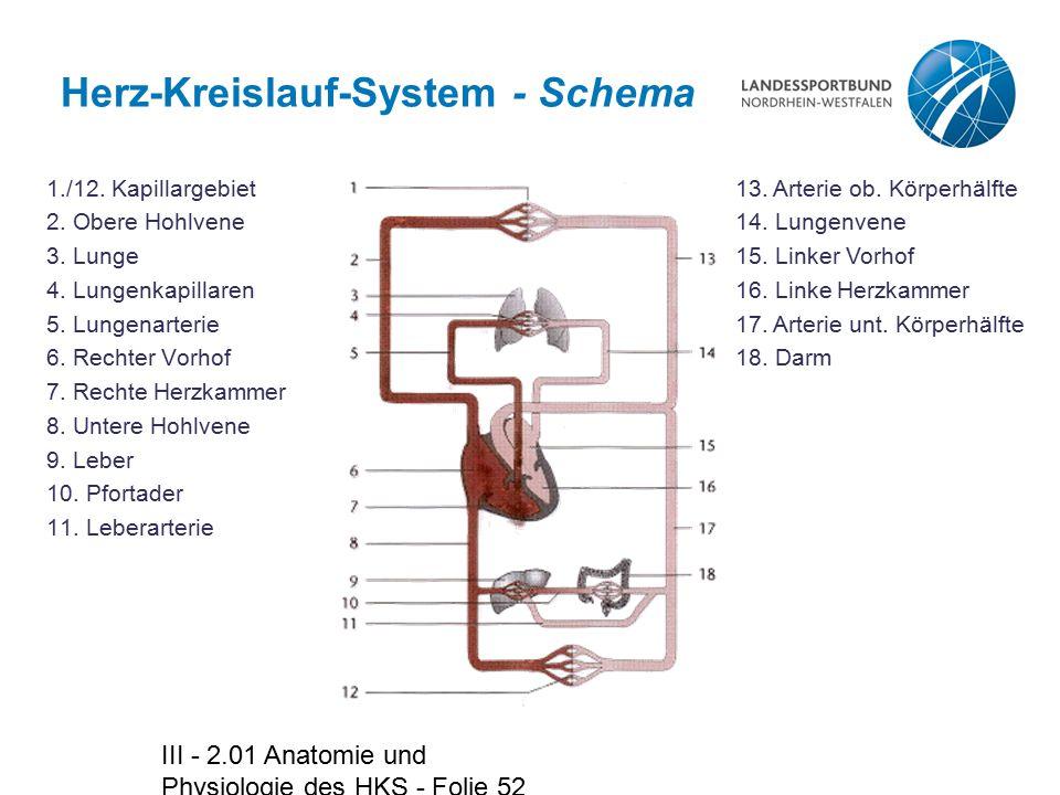 III - 2.01 Anatomie und Physiologie des HKS - Folie 52 Herz-Kreislauf-System - Schema 1./12. Kapillargebiet 2. Obere Hohlvene 3. Lunge 4. Lungenkapill