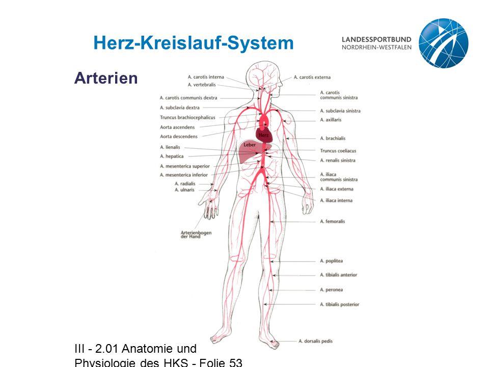 III - 2.01 Anatomie und Physiologie des HKS - Folie 53 Herz-Kreislauf-System Arterien