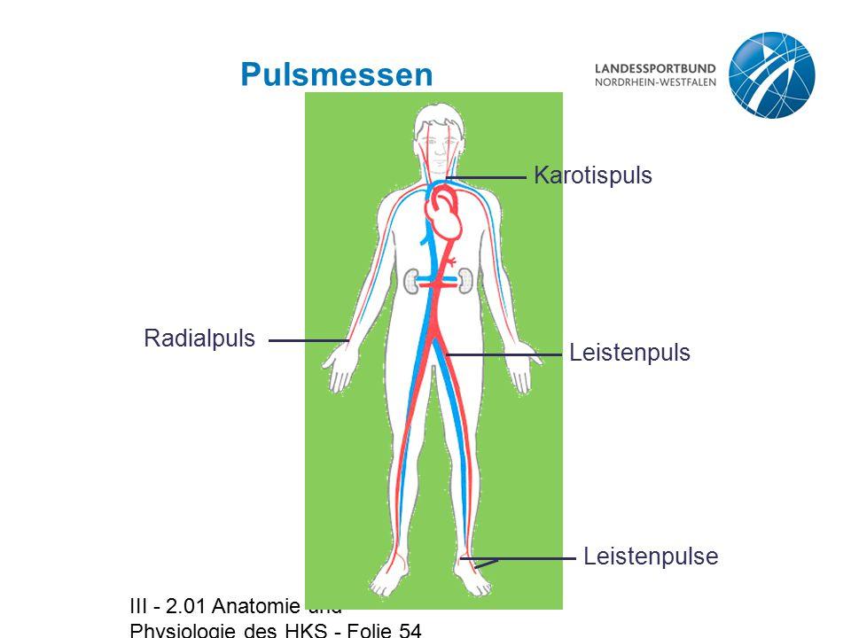 III - 2.01 Anatomie und Physiologie des HKS - Folie 54 Pulsmessen Radialpuls Karotispuls Leistenpuls Leistenpulse