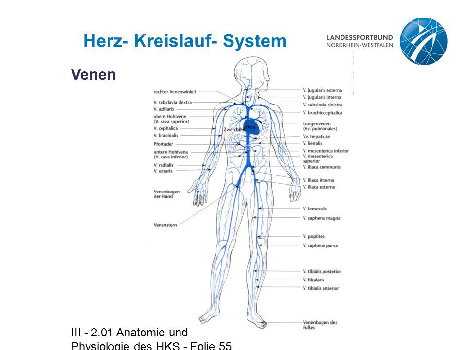 III - 2.01 Anatomie und Physiologie des HKS - Folie 55 Herz- Kreislauf- System Venen