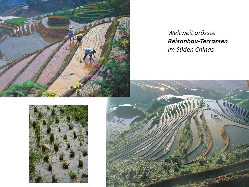 """Schweizer Delegation von """"Tee-Pflückern in einer Tee-Plantage im Süden Chinas"""