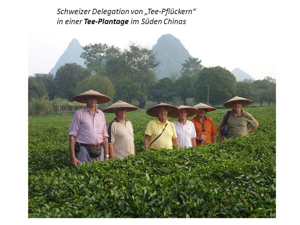 Der Tee stammt urspr.aus China.