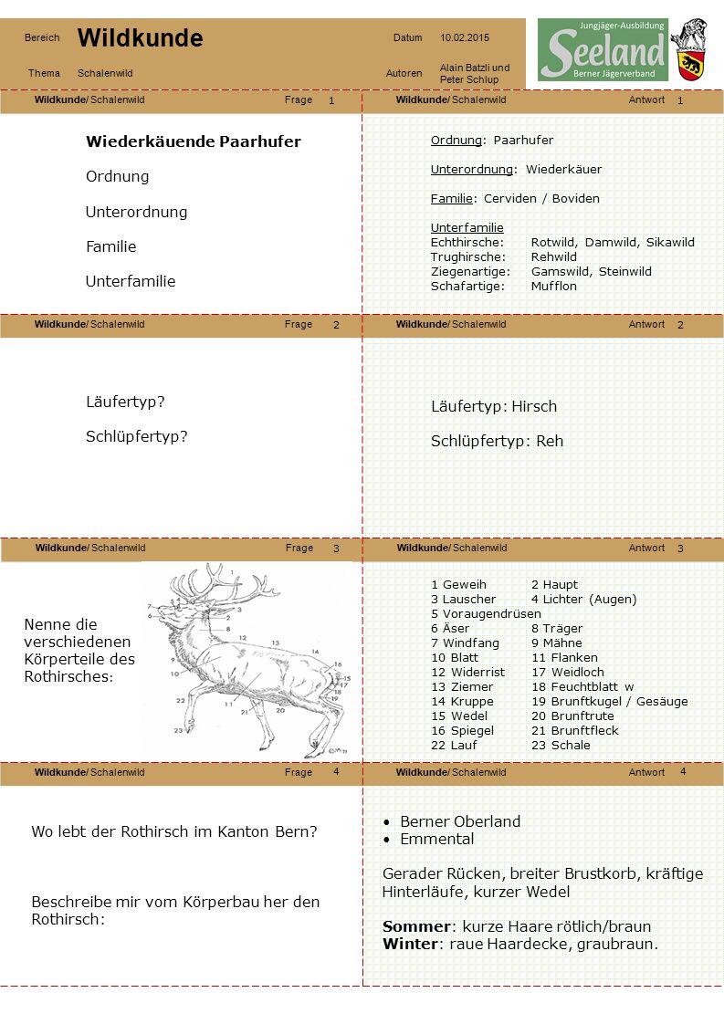 Wildkunde/ SchalenwildFrageWildkunde/ SchalenwildAntwort Wildkunde/ SchalenwildFrageWildkunde/ SchalenwildAntwort Wildkunde/ SchalenwildFrageWildkunde/ SchalenwildAntwort Wildkunde/ SchalenwildFrageWildkunde/ SchalenwildAntwort Bereich Wildkunde Datum10.02.2015 ThemaSchalenwildAutoren Alain Batzli und Peter Schlup 55 6 8 7 6 7 8 Nenne die verschieden Sprossen des Geweihs vom Hirsch Nenne die verschiedenen Geweihe: Augensprossen Eissprossen Mittelsprossen Wolfsspross (selten) Krone Ungerader, Spiesser, Gabler, Sechser, Achter, Eissprossenzehner, Kronenzehner Wie leben Rothirsche zusammen.