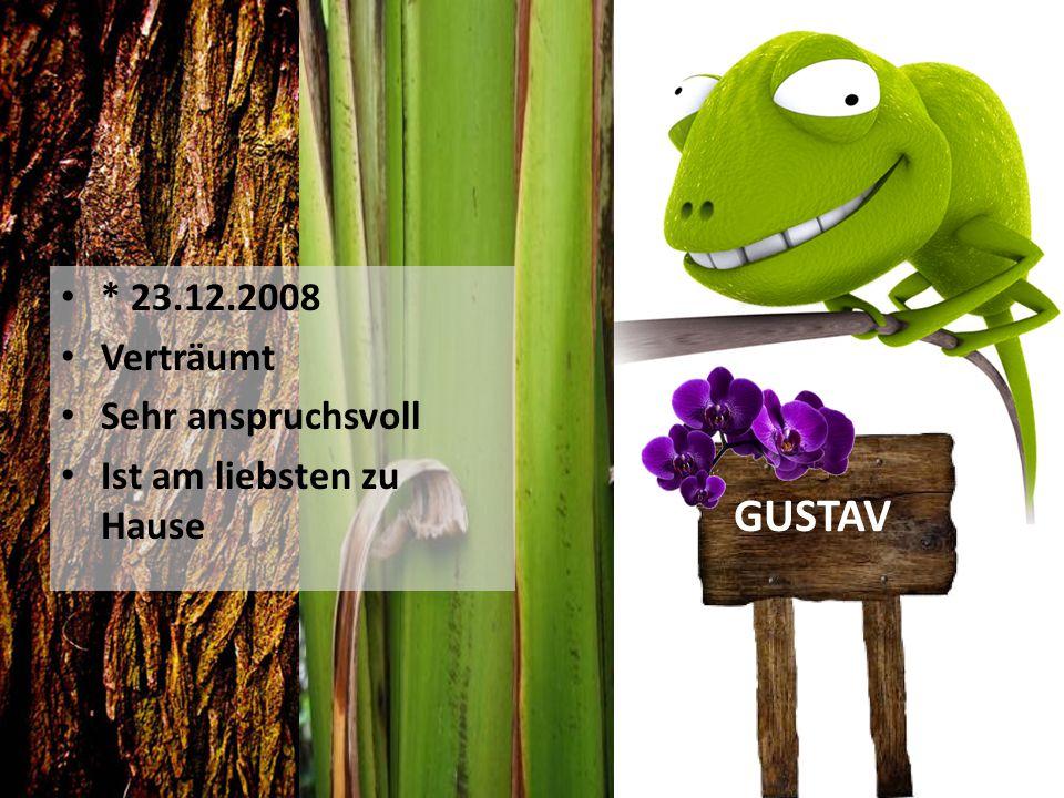 * 23.12.2008 Verträumt Sehr anspruchsvoll Ist am liebsten zu Hause GUSTAV