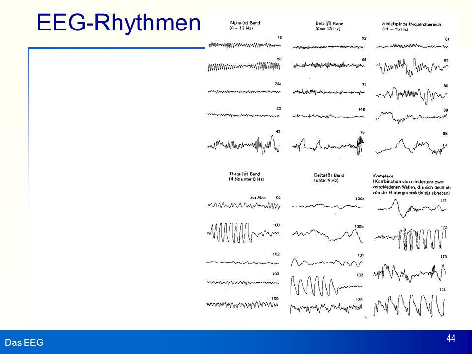 Das EEG 44 EEG-Rhythmen