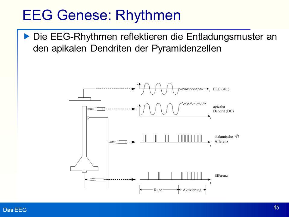 Das EEG 45 EEG Genese: Rhythmen  Die EEG-Rhythmen reflektieren die Entladungsmuster an den apikalen Dendriten der Pyramidenzellen