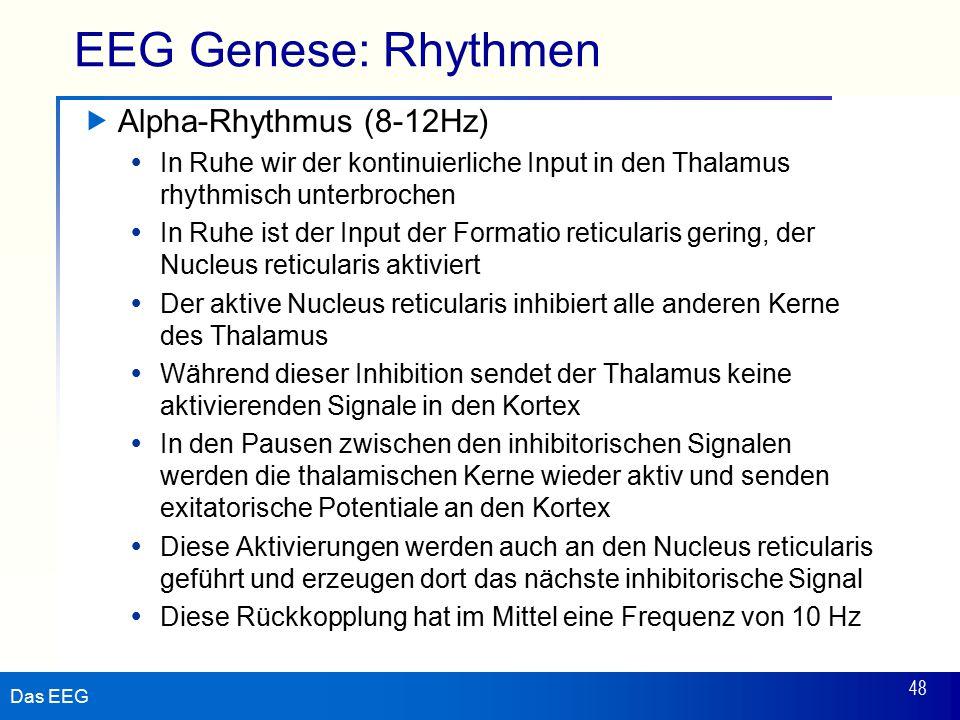 Das EEG 48 EEG Genese: Rhythmen  Alpha-Rhythmus (8-12Hz)  In Ruhe wir der kontinuierliche Input in den Thalamus rhythmisch unterbrochen  In Ruhe is