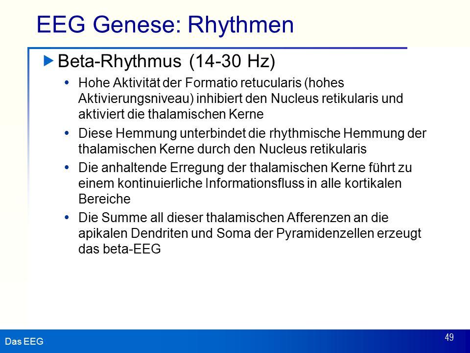 Das EEG 49 EEG Genese: Rhythmen  Beta-Rhythmus (14-30 Hz)  Hohe Aktivität der Formatio retucularis (hohes Aktivierungsniveau) inhibiert den Nucleus retikularis und aktiviert die thalamischen Kerne  Diese Hemmung unterbindet die rhythmische Hemmung der thalamischen Kerne durch den Nucleus retikularis  Die anhaltende Erregung der thalamischen Kerne führt zu einem kontinuierliche Informationsfluss in alle kortikalen Bereiche  Die Summe all dieser thalamischen Afferenzen an die apikalen Dendriten und Soma der Pyramidenzellen erzeugt das beta-EEG