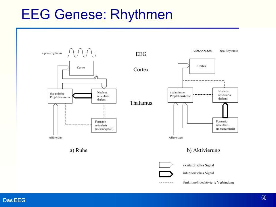 Das EEG 50 EEG Genese: Rhythmen