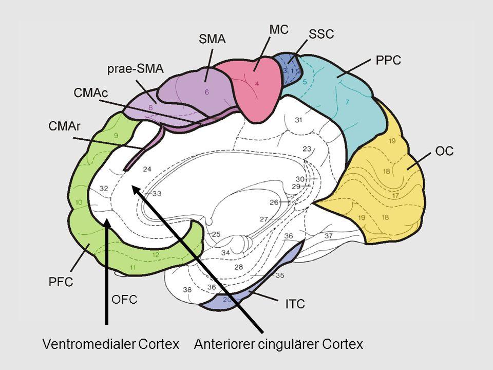 OFC Ventromedialer CortexAnteriorer cingulärer Cortex