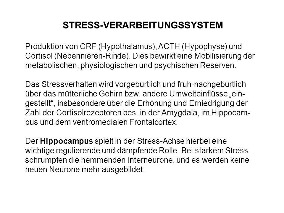 STRESS-VERARBEITUNGSSYSTEM Produktion von CRF (Hypothalamus), ACTH (Hypophyse) und Cortisol (Nebennieren-Rinde). Dies bewirkt eine Mobilisierung der m