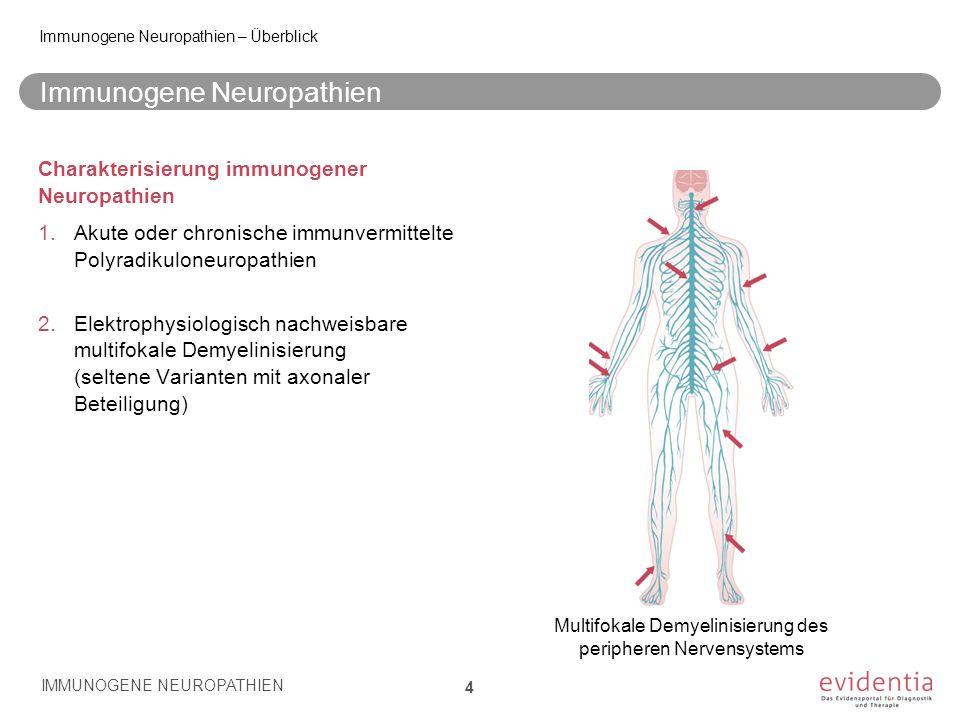 Immunogene Neuropathien Charakterisierung immunogener Neuropathien 1.Akute oder chronische immunvermittelte Polyradikuloneuropathien 2.Elektrophysiolo