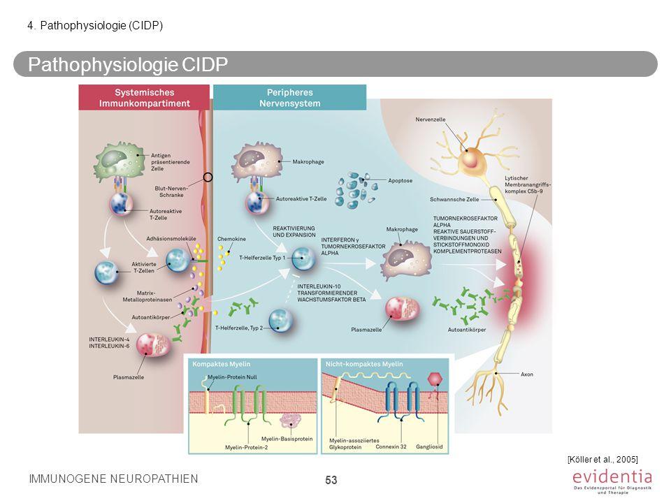 Pathophysiologie CIDP IMMUNOGENE NEUROPATHIEN 53 4. Pathophysiologie (CIDP) [Köller et al., 2005]