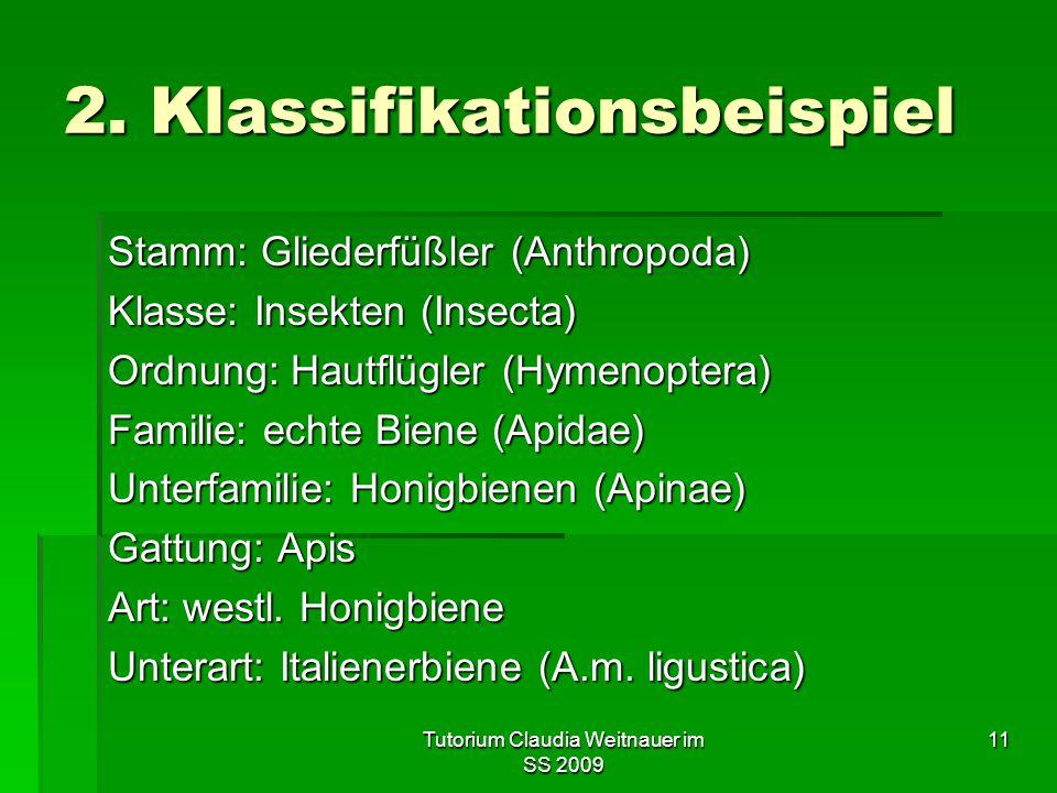 Tutorium Claudia Weitnauer im SS 2009 11 2. Klassifikationsbeispiel Stamm: Gliederfüßler (Anthropoda) Klasse: Insekten (Insecta) Ordnung: Hautflügler