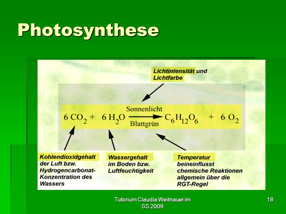 Tutorium Claudia Weitnauer im SS 2009 18 Photosynthese