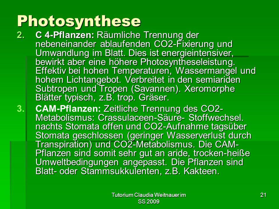Tutorium Claudia Weitnauer im SS 2009 21 Photosynthese 2.C 4-Pflanzen: Räumliche Trennung der nebeneinander ablaufenden CO2-Fixierung und Umwandlung im Blatt.