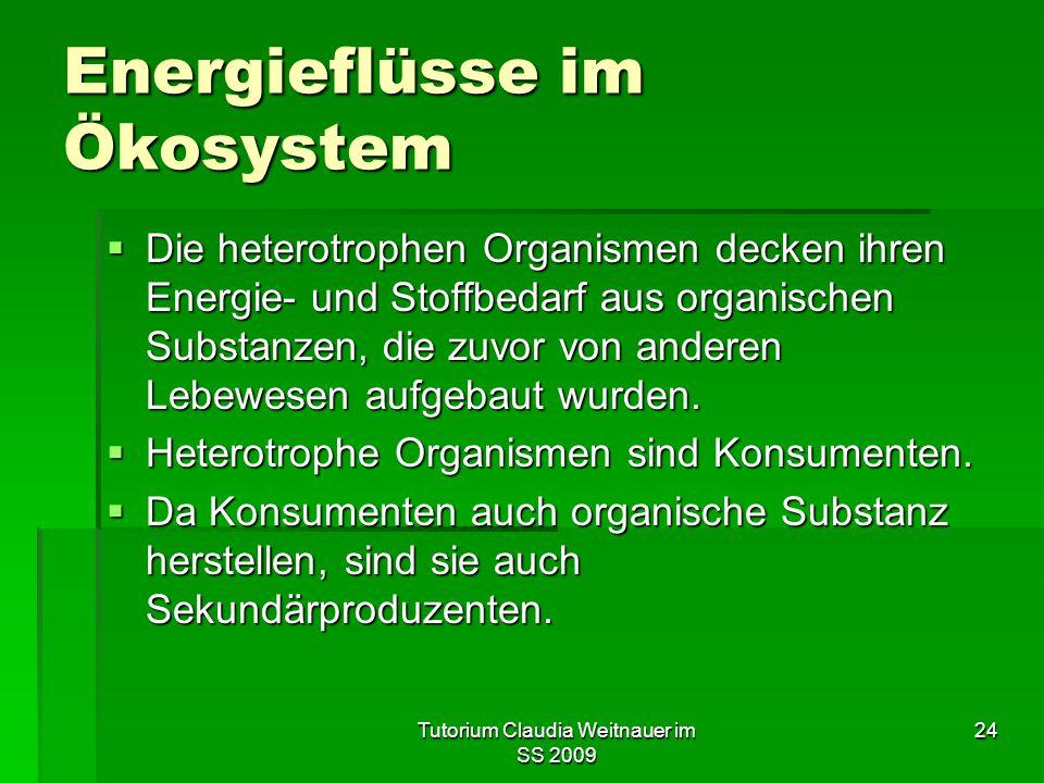 Tutorium Claudia Weitnauer im SS 2009 24 Energieflüsse im Ökosystem  Die heterotrophen Organismen decken ihren Energie- und Stoffbedarf aus organischen Substanzen, die zuvor von anderen Lebewesen aufgebaut wurden.