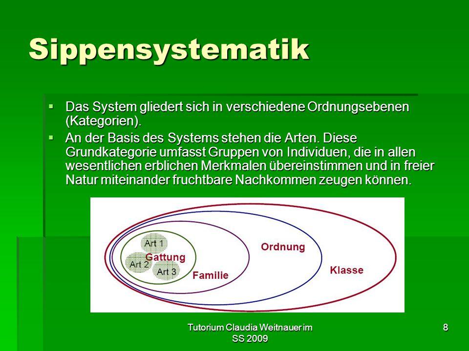 Tutorium Claudia Weitnauer im SS 2009 8 Sippensystematik  Das System gliedert sich in verschiedene Ordnungsebenen (Kategorien).  An der Basis des Sy