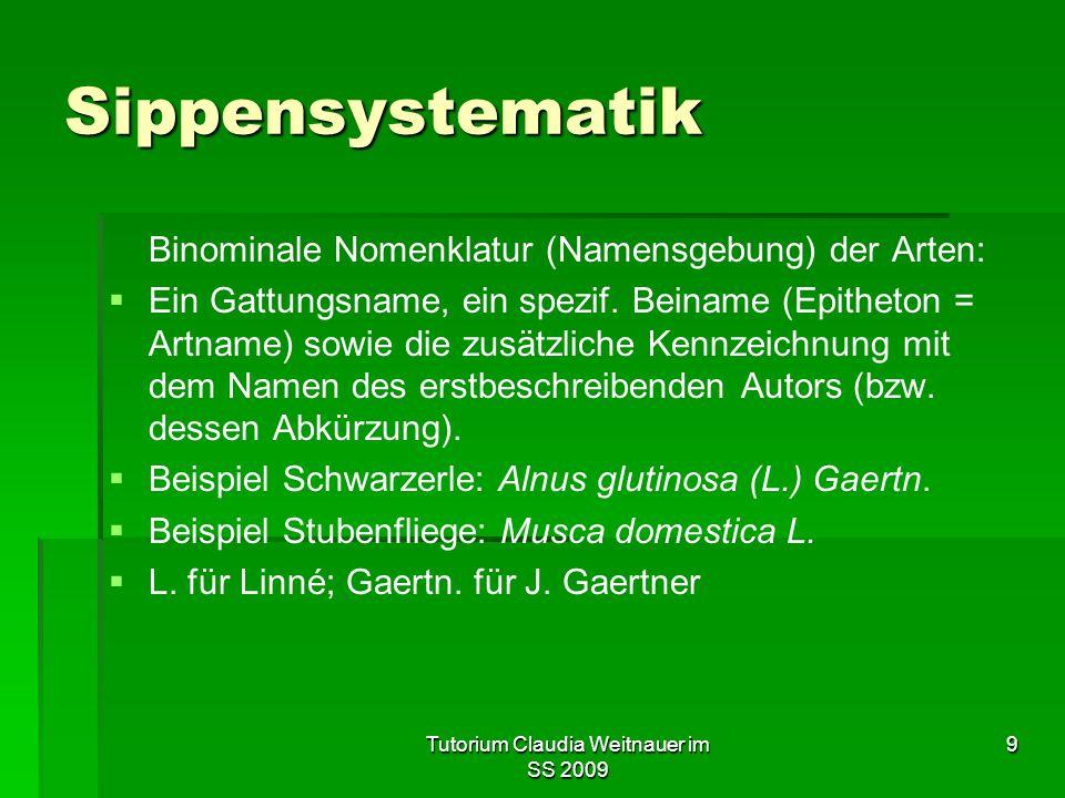 Tutorium Claudia Weitnauer im SS 2009 9 Sippensystematik Binominale Nomenklatur (Namensgebung) der Arten:   Ein Gattungsname, ein spezif.