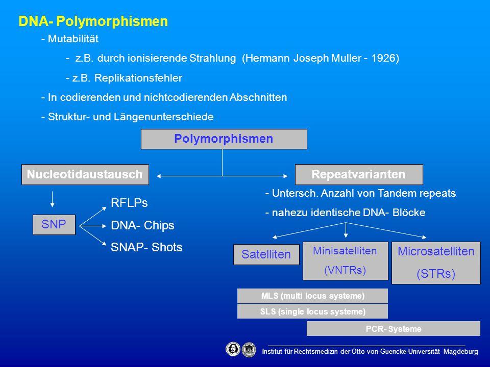 Institut für Rechtsmedizin der Otto-von-Guericke-Universität Magdeburg DNA- Polymorphismen Polymorphismen - Untersch. Anzahl von Tandem repeats - nahe