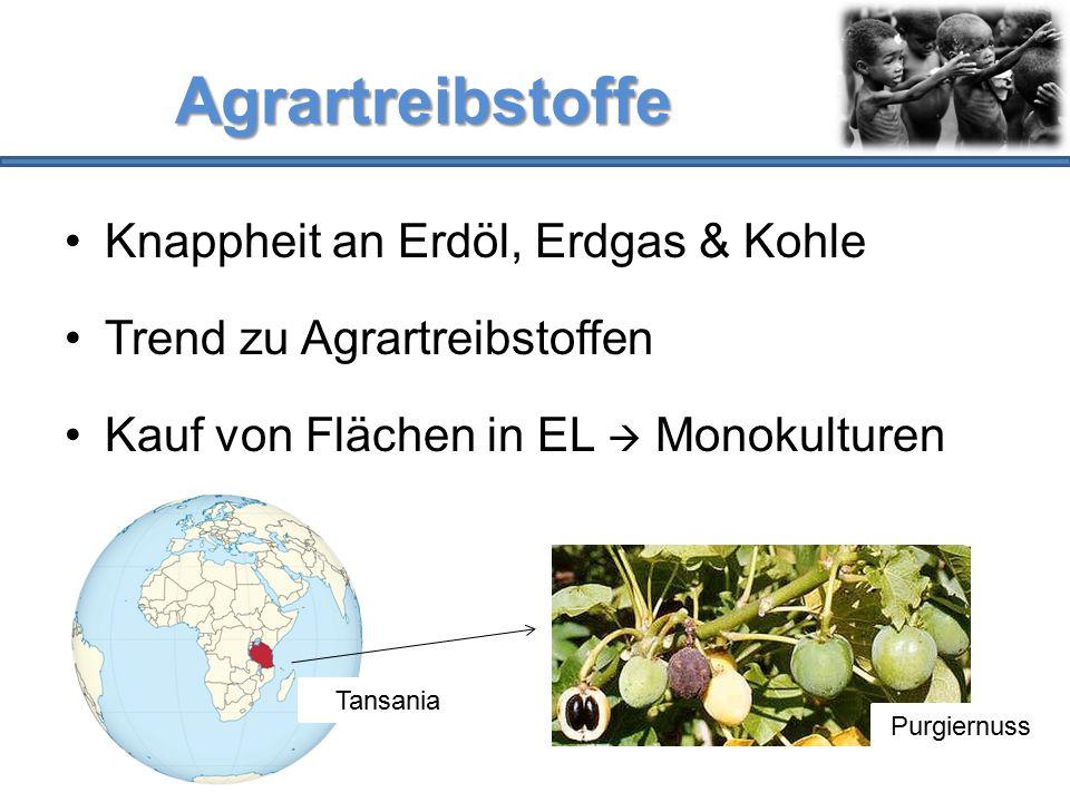 Agrartreibstoffe Knappheit an Erdöl, Erdgas & Kohle Trend zu Agrartreibstoffen Kauf von Flächen in EL  Monokulturen Tansania Purgiernuss