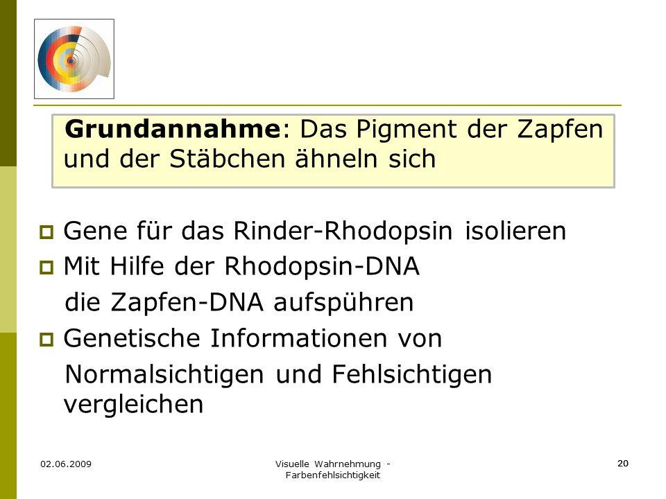 Visuelle Wahrnehmung - Farbenfehlsichtigkeit 20 Grundannahme: Das Pigment der Zapfen und der Stäbchen ähneln sich  Gene für das Rinder-Rhodopsin isol